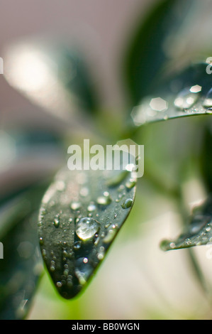 Water drops on a plant leaf. - Stock Photo
