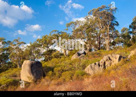 Eucalyptus trees and bushland growing on the granite escarpments of John Forrest National Park. Perth, Western Australia - Stock Photo