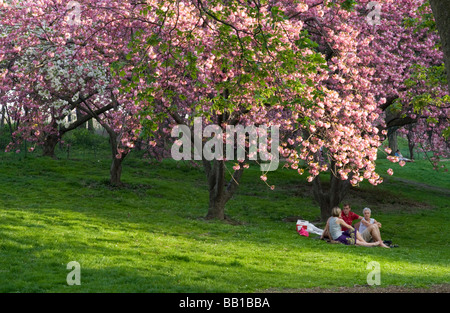 People enjoying the cherry blossoms in Central Park New York on a beautiful spring day - Stock Photo