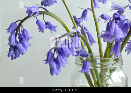 Bluebells in a jam jar - Stock Photo