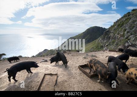 agriculture animal antillen antilles bovenwinden bovenwindse caribbean day daytime dutch eiland eilanden farm farming horizontal