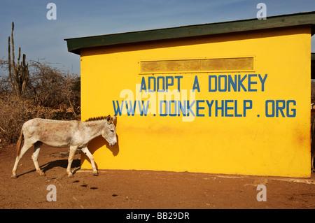 Netherlands Antilles Bonaire the donkey sanctuary home for stray donkeys - Stock Photo