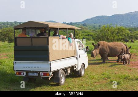 safari vehicle white rhinos, Ceratotherium simum, Private 'Game Reserve', 'South Africa' - Stock Photo