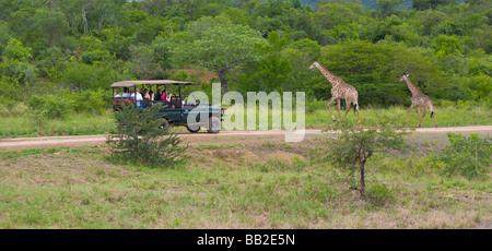 People in safari vehicle viewing giraffes, Giraffa camelopardarlis, Hluhluwe 'Game Reserve', KwaZulu Natal, 'South - Stock Photo