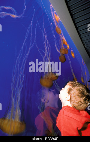 United States of America, California, Monterey. Monterey Bay Aquarium, sea nettle display. - Stock Photo