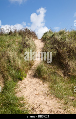Pathway up over a seaside sand dune covered in marram grass and gorse bushes UK - Stock Photo