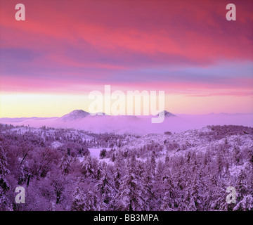 USA, California, San Diego. Snow-covered trees in the Laguna Mountains,   Cleveland National Forest. - Stock Photo