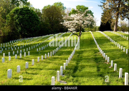 Rows of white gravestones and a dogwood tree in bloom in the spring at the Annapolis National Cemetery, Annapolis, - Stock Photo