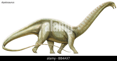 Apatosaurus ('deceptive lizard,' formerly known as Brontosaurus), a massive herbivorous dinosaur from the Late Jurassic - Stock Photo