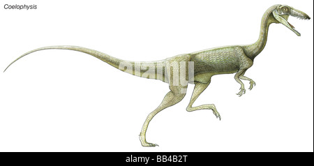 Coelophysis, a late Triassic dinosaur. A predator living in large herds, it had hollow limbs, similar to birds. - Stock Photo