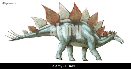 Stegosaurus, 'roof lizard,' the largest known plated dinosaur, lived during the late Jurassic period. - Stock Photo