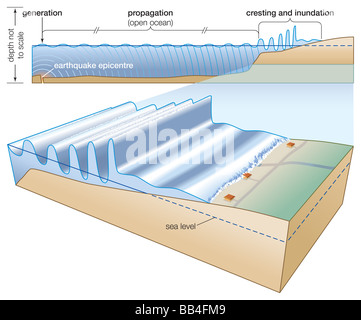 Generated by an undersea earthquake, a tsunami may propagate over open ocean waters before cresting and inundating - Stock Photo