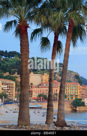 Palm trees on Promenade des Anglais in Nice, France on the French riviera - Stock Photo
