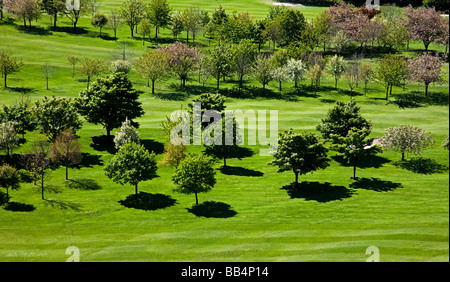 Trees photographed from distance in bright sunshine casting shadows on very green grass during early spring - Stock Photo