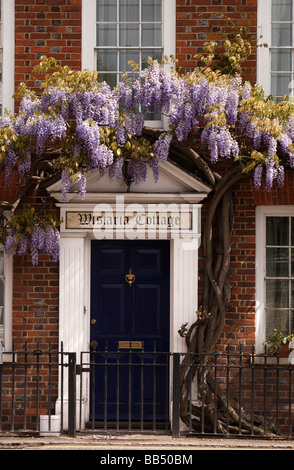 England Berkshire Cookham Sutton Road Wistaria Cottage Wisteria hung front of John Lewis Partnership building - Stock Photo