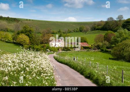 Country lane in spring, Pitcombe, near Littlebredy, Dorset - Stock Photo