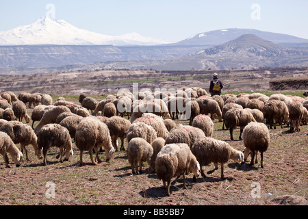 Sheep herder with his flock of sheep in Turkey - Stock Photo