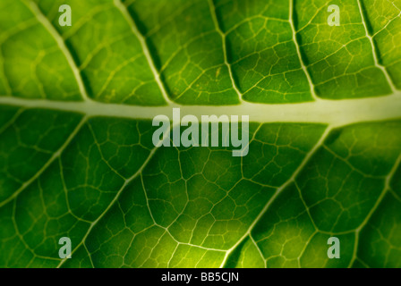 Selective focus Dandilion leaf detail - Stock Photo