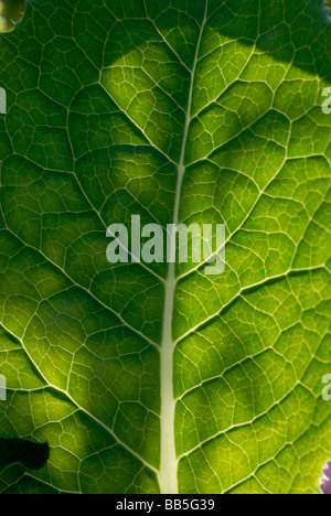 Selective focus leaf detail - Stock Photo