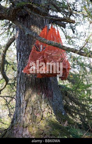 Rather macabre find of sacks of Deer jaw bones in the woods - Stock Photo