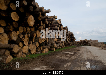 Pile of cut logs in a rural area in Republika Srpska, an entity of Bosnia and Herzegovina - Stock Photo
