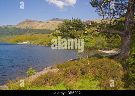 Spring colours on Loch Lomond Rowardennan Youth Hostel Ben Lomond Scotland May 2009 - Stock Photo
