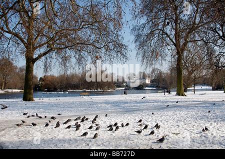 Pigeons on snow Boating Lake Regents Park in winter London England UK - Stock Photo