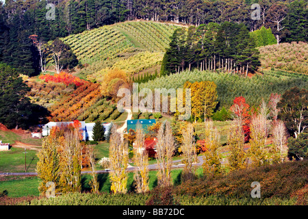 Vineyards at Forest Range in the Mount Lofty Ranges South Australia - Stock Photo