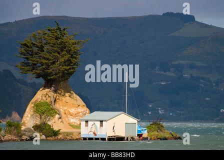 Boat shed, rock and tree near Portobello at the Otago Peninsula, New Zealand - Stock Photo