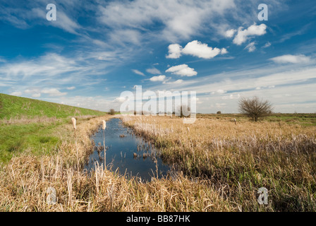 Reedbed in March at Baston Fen Nature Reserve, Lincolnshire, England - Stock Photo