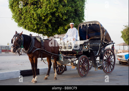 Horse-drawn carriage waiting for customers, Luxor, Egypt, Africa - Stock Photo
