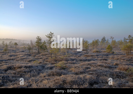 raised bog at dawn - Stock Photo