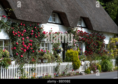 Old fashioned Rose Cottage. Thatched cottage with climbing red roses in Wherwell, Hampshire, England - Stock Photo