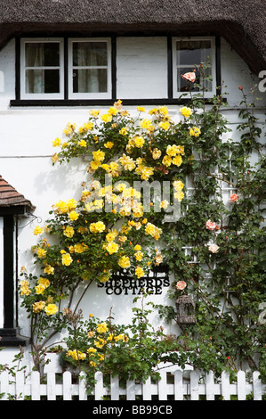 Old fashioned Rose Cottage. Thatched cottage with climbing yellow roses in Wherwell, Hampshire, England - Stock Photo
