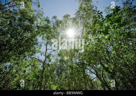Green vibrant forest with sun shining through the leaves - Stock Photo