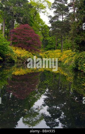 Mossy Ghyll Pond Leonardslee Gardens - Stock Photo