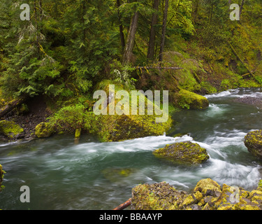 Tanner creek flowing through the spring rainforest Wahclella falls trail in Columbia Gorge national Scenic Area, - Stock Photo