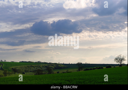 Lincolnshire Wolds in Summer - Stock Photo
