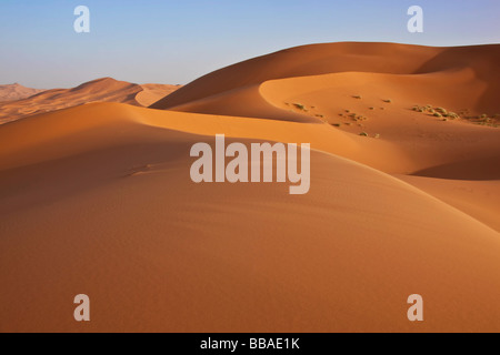 Hight sand dunes with clear blue sky in the Sahara desert - Stock Photo