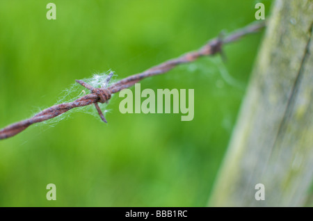 Cobwebs on a rusty barbed wire fence in the British countryside - Stock Photo