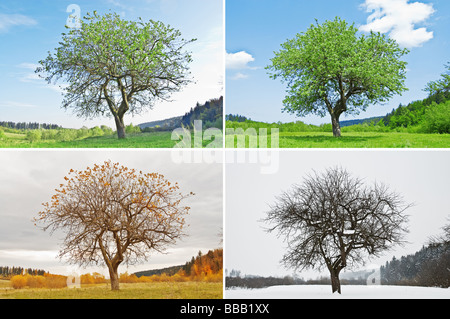 four seasons tree - Stock Photo