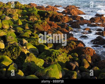 Algae-covered stones in the sea, La Palma, Canary Islands, Spain - Stock Photo