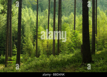 Wald forest 41 - Stock Photo