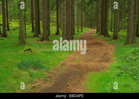 Wald forest 44 - Stock Photo