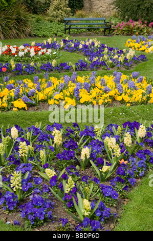Colorful flower beds in Sheffield's City Botanical Gardens  in spring time South Yorkshire England UK - Stock Photo