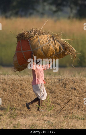 Indian farmer walking across field with crop in bag on head, Ranthambore, Rajasthan, India - Stock Photo