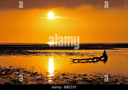 Driftwood tree trunk, in the glow of a golden sunset, on the beach at St.Anne's, near Blackpool, United Kingdom - Stock Photo