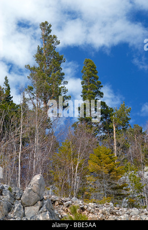 High pine over blue sky in mountains - Stock Photo