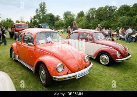 A pair of Volkswagon Beetles on display at Wallingford Classic car Rally, Oxfordshire, UK - Stock Photo