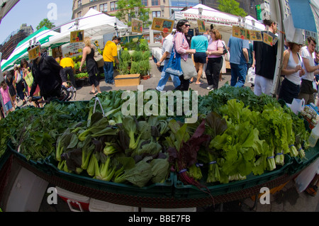 Bok choy Lettuce and other vegetables on sale at farmers stands in the Union Square Greenmarket in New York - Stock Photo